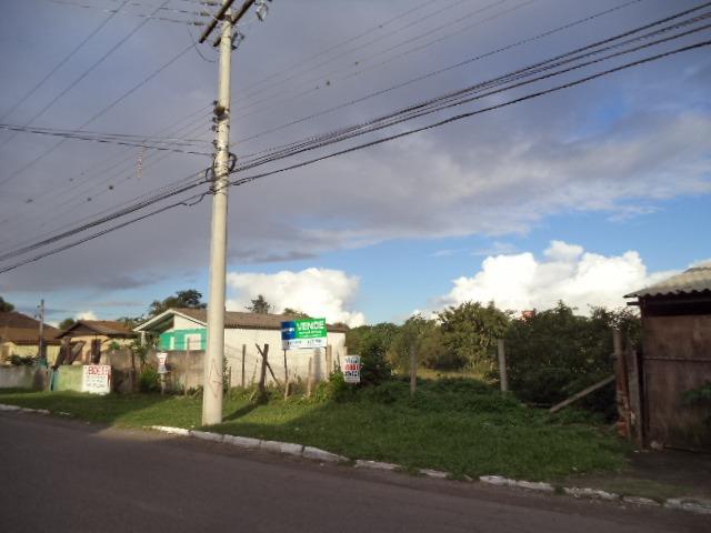 Brandalise Imóveis - Terreno, Rio Branco, Canoas - Foto 6