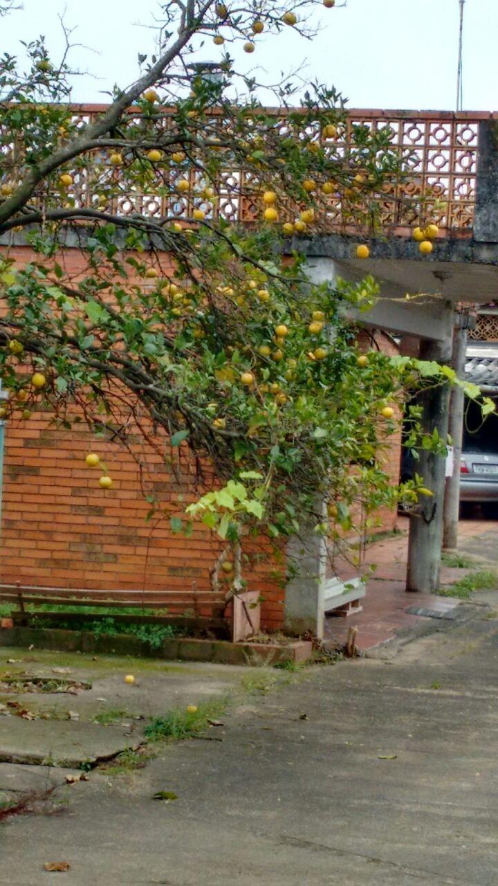Terreno, Niterói, Canoas (BD3137) - Foto 2